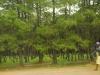 10-12-26_las_eukaliptusowy_przed_huambo_ns