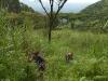 111029_ss-052-sawanna-drzewiasta-z-akacjami-pjk