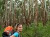 111029_ss-092-las-eukaliptusowy-pjk