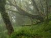 111030_ss-100-deszczowy-las-mgielny-pjk
