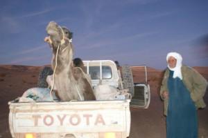 Tuareg z pupilkiem